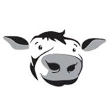 Polder Casino koe